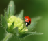 fotos-de-la-naturaleza-mario-perez-panasonic