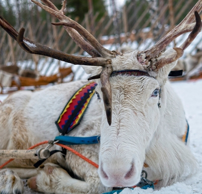 Saludos desde el pueblo de Papá Noel