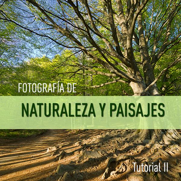 Trucos para realizar fotografías de Naturaleza y Paisajes (II): TEXTURAS E ILUMINACIÓN