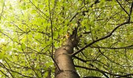 árbol sostenibilidad