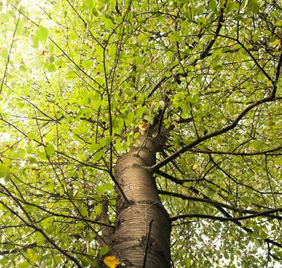 Clima, agua y árbol, raíces de todas las cosas.