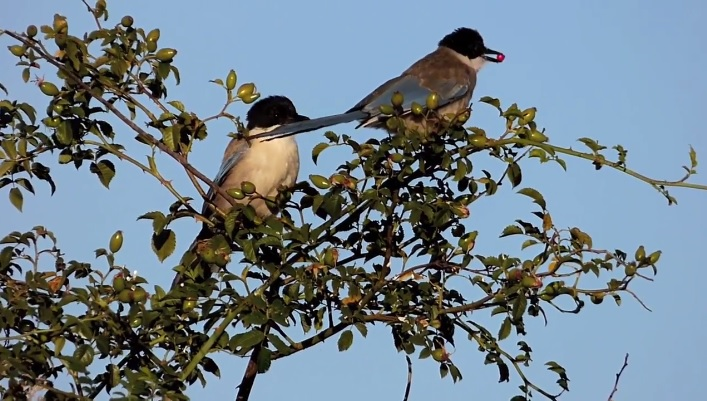 La importancia del estabilizador de imagen para la fotografía de aves