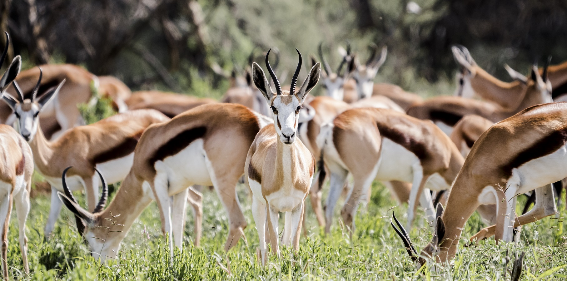 Namibia, bajo la lente de la Lumix GH5