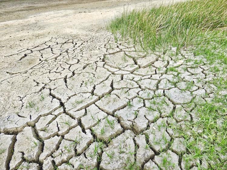 La desertificación avanza inexorablemente